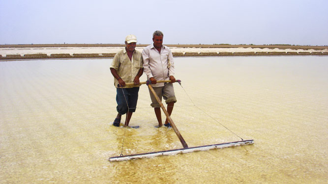 Salt farmers in Gujarat