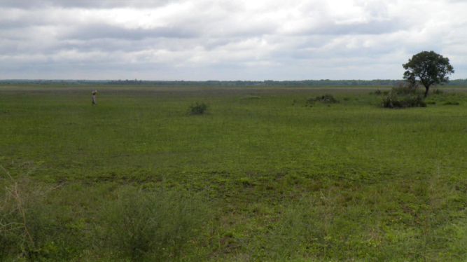 floodplain Mozambique