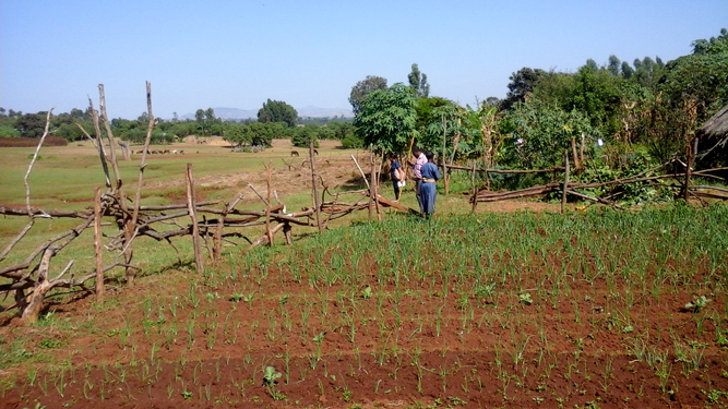 small-scale irrigation in Ethiopia